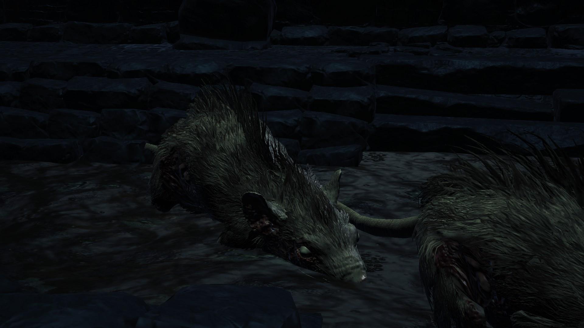 hound-rat.jpg