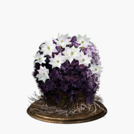 blooming-purple-moss-clump-dish-small.jpg