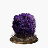 purple-moss-clump-dish-small.jpg